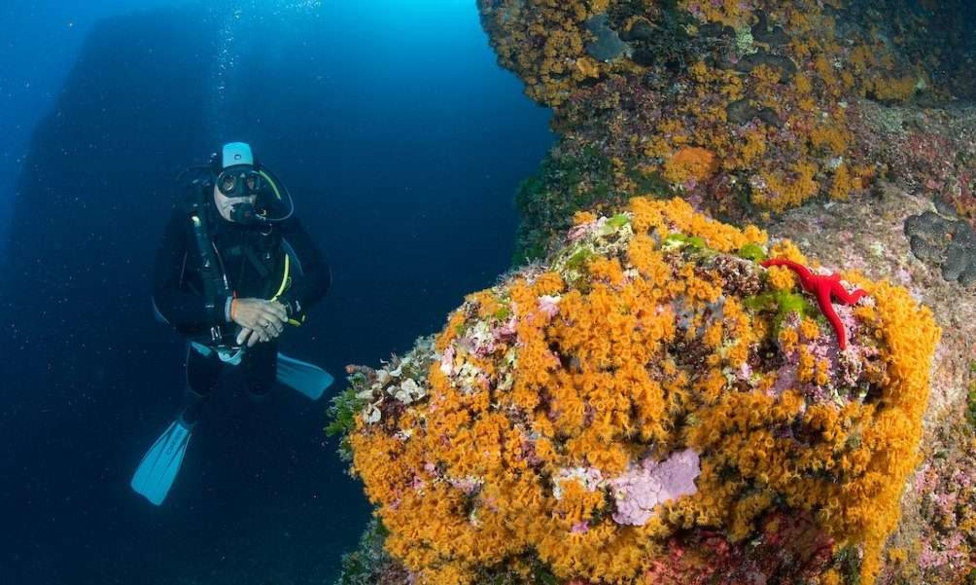 Immersioni subacquee Campania