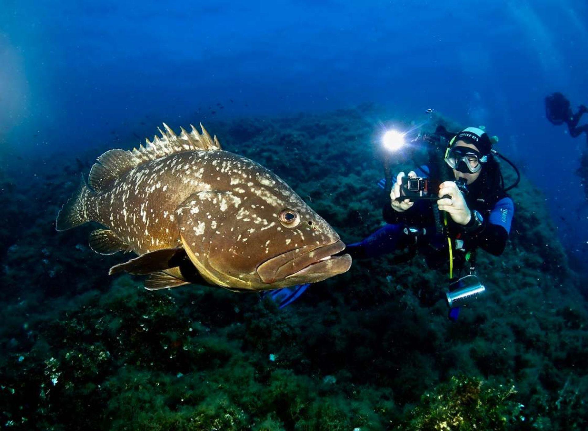 Immersioni subacquee Pianosa