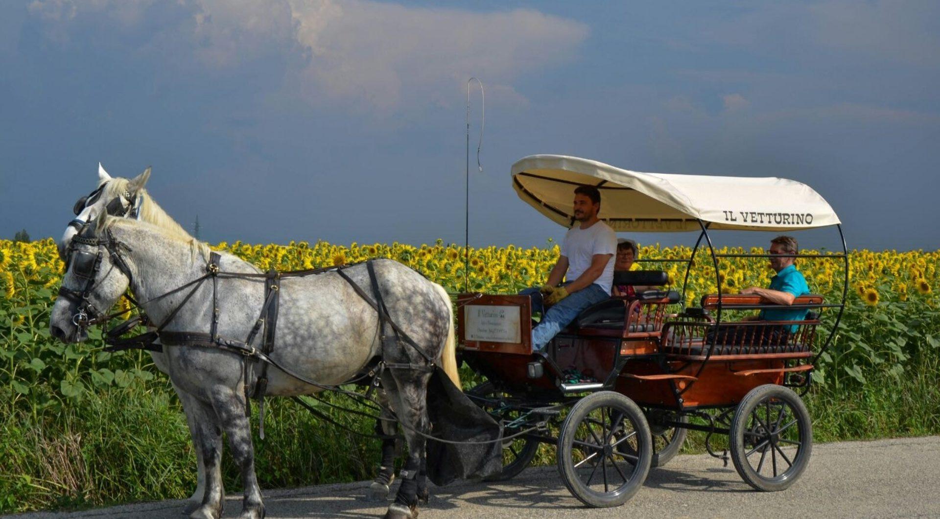 Passeggiate a cavallo Assisi
