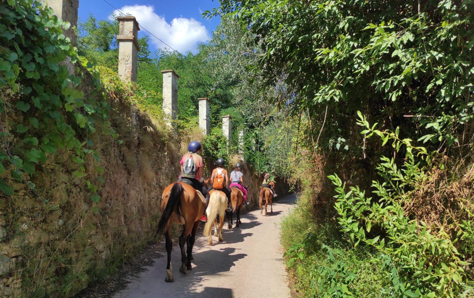 Passeggiate a cavallo Pisa
